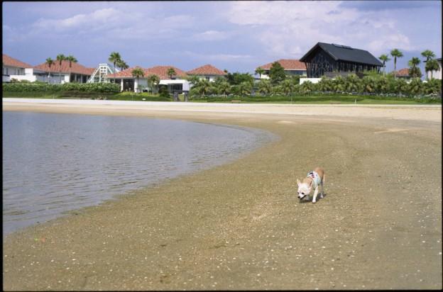 空港島西緑地人工海浜公園(ラヴィマーナ神戸)
